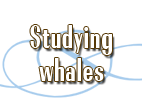 Studying whales